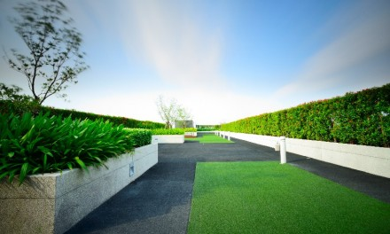 Zielone dachy – dziś ciekawostka, jutro konieczność