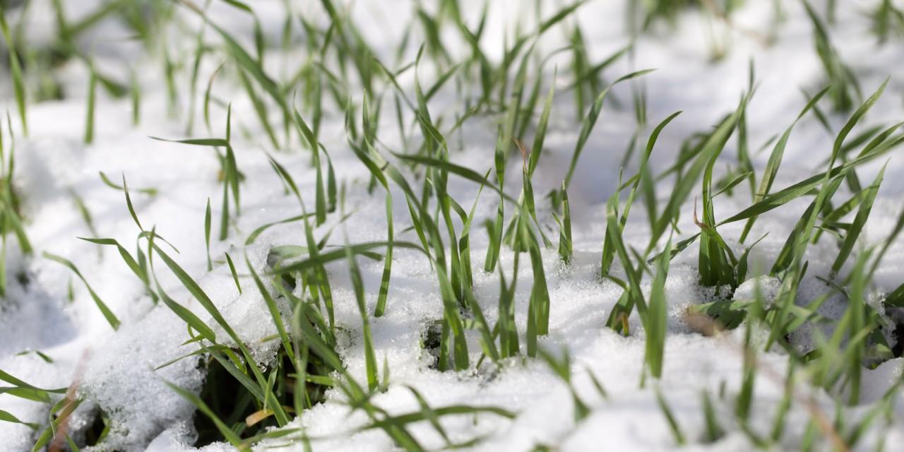 Trawnik po zimie – wszystko, co powinieneś wiedzieć o jego pielęgnacji