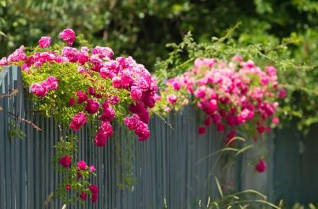 Szybki Ogrod Rosliny
