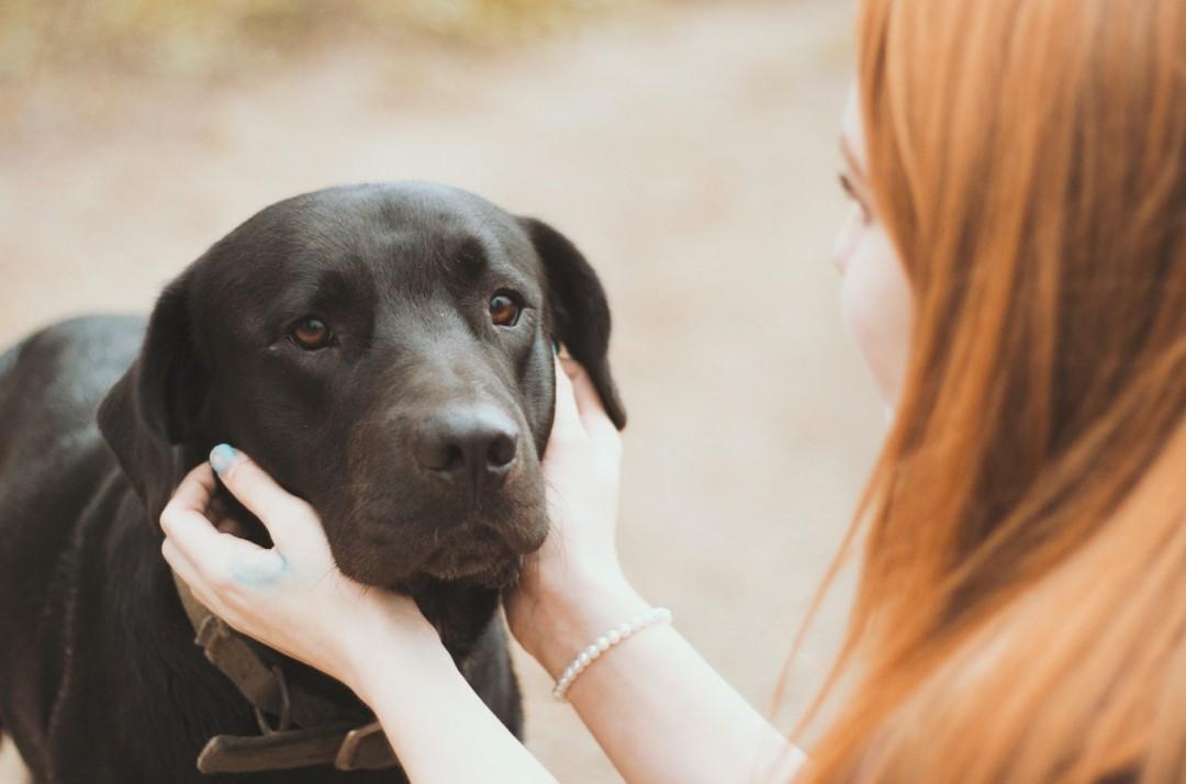 Prawidłowe żywienie psa – czym karmić pupila?