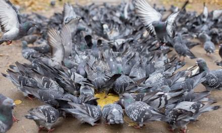Zimowe dokarmianie ptaków