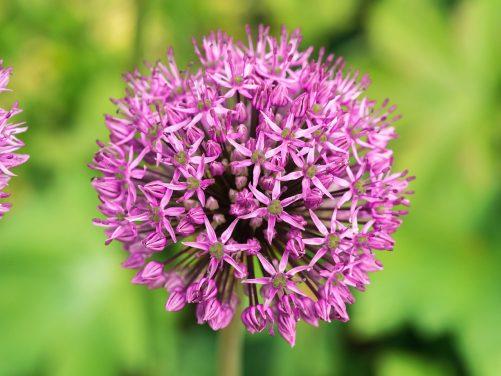 Kwiaciarnia z posłańcem, czyli jak wysłać kwiaty ukochanej osobie