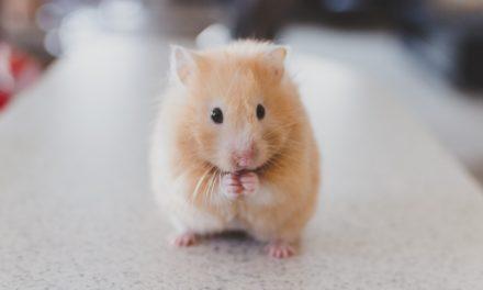 NIE dla testowania kosmetyków na zwierzętach