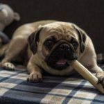 Przysmaki dla psów – wszystko, co trzeba o nich wiedzieć