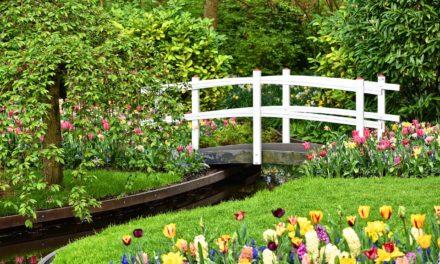 Projektowanie pięknych ogrodów – Poznań i okolice
