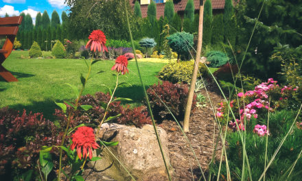 Jak pielęgnować ogród na wiosnę?