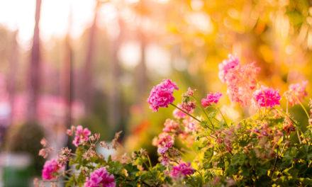 Kwietnik z opon – sposób na ekologiczne DIY