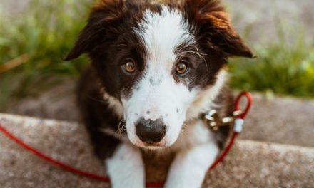 3 niebezpieczne sytuacje, które mogą spotkać Twojego psa