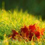 Jak zadbać o ogród jesienią?