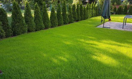 Dlaczego warto wybrać trawnik z rolki?